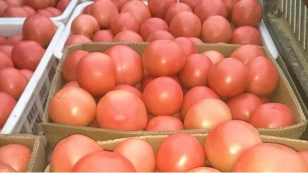 西红柿裂果怎么控制?看完就知道怎么做了